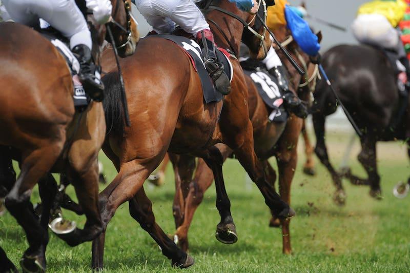 Plumpton Sussex Raceday 2022